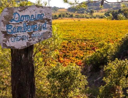 La vigne et le vignoble Minervois – Domaine Camberaud